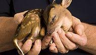 30 фотографий новорожденных животных, которые согреют душу
