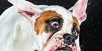 Собаки в замедленной съемке