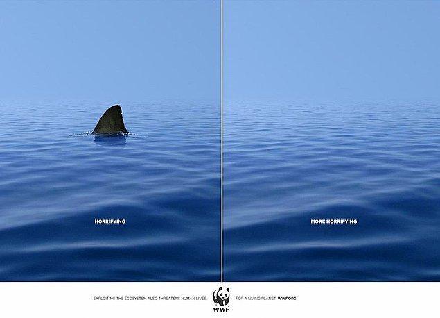 4. WWF: Köpekbalığı