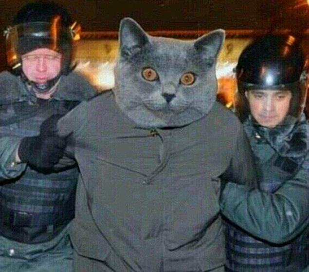 19. Trafo kedisi yakalandı..