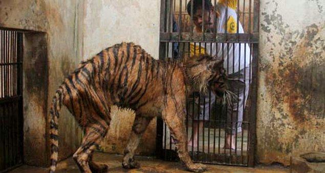 10. Ölen hayvanlara ne yapıldığına gelelim
