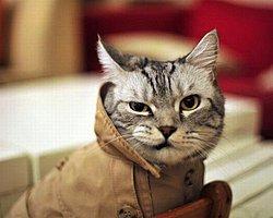 17 доказательств того, что коты уничтожат человечество