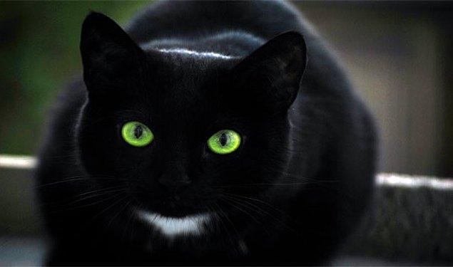 3. Evinizin önünden kara kedi geçmesi