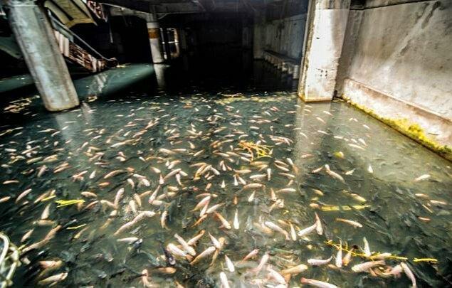 AVM harabesi içinde balıklı bir göl... Gerçekten çok ilginç bir manzara