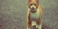 25 поводов для приобретения кошки