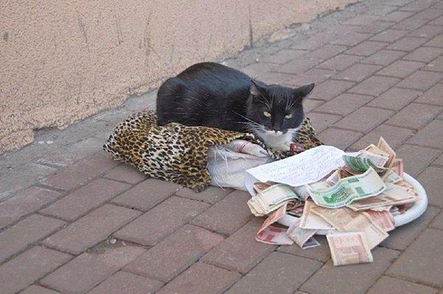 4. Dilencilik yapan Rus kedisi