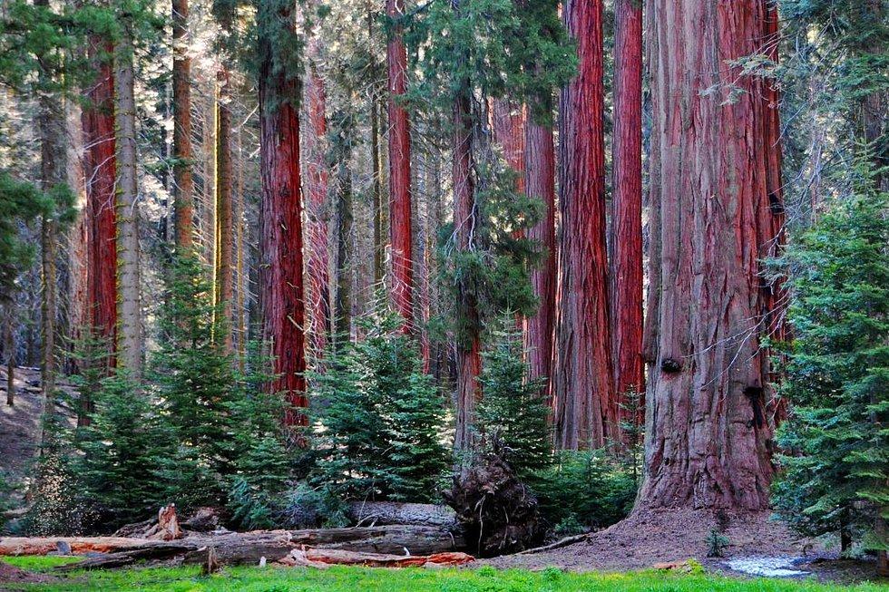Sequoia National Park, California - United States