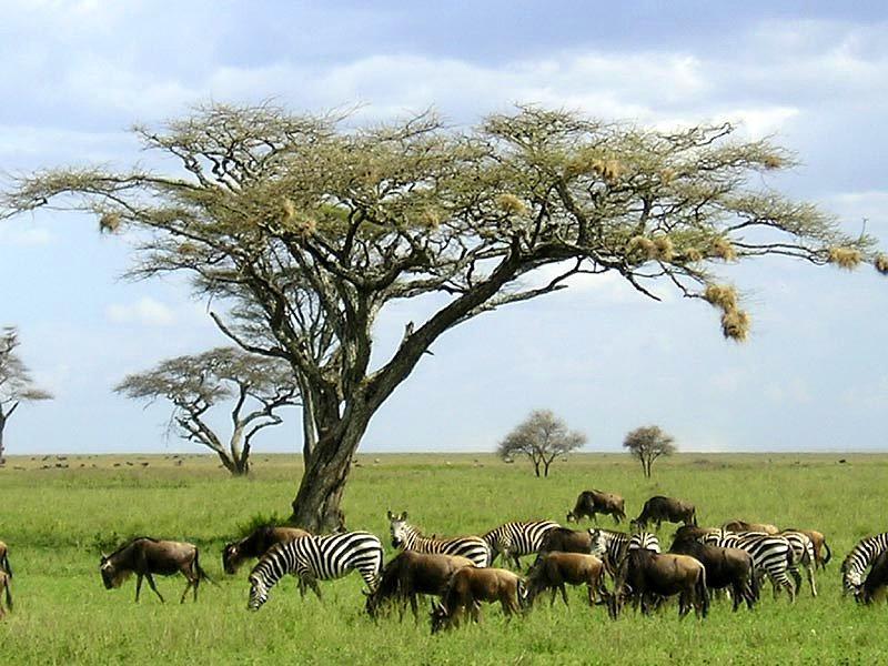 Serengeti National Park, Serengeti - Tanzania
