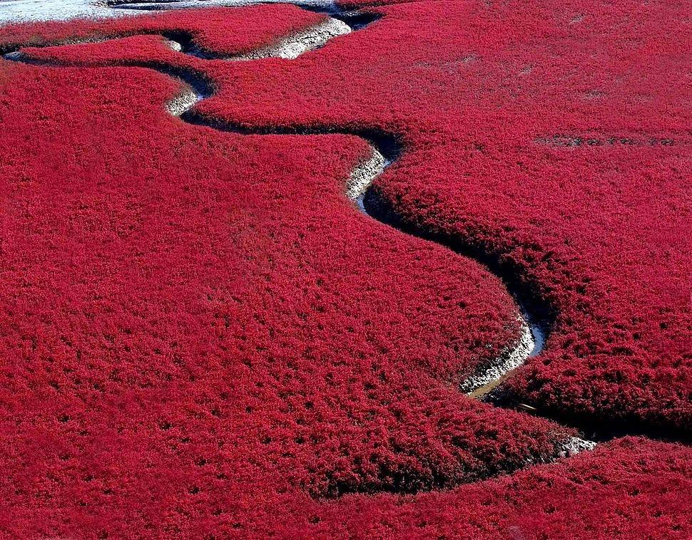 Red Beach, China
