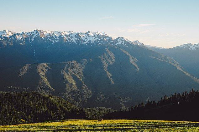 14. ''Manzaradaki ve doğadaki değişiklikleri günlüğe aktarmak istediğimiz için, yükseklere çıktık. İşte Washington'ın en yüksek yerlerinden biri Hurricane Ridge, tabi akşam güneşiyle rahatlayan büyük erkek bir geyikle birlikte.''
