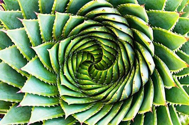 23. Doğanın hayranıyım, doğal geometrinin hastasıyım