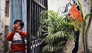 Delhi Sokaklarını Bambaşka Bir Kimliğe Büründüren Sokak Sanatı Festivalinden 20 Çarpıcı Fotoğraf