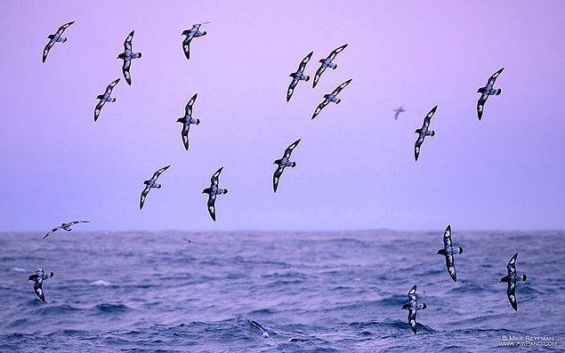 10. Günbatımında kuşlar buzların üzerinden poz verir gibi uçuyorlar.