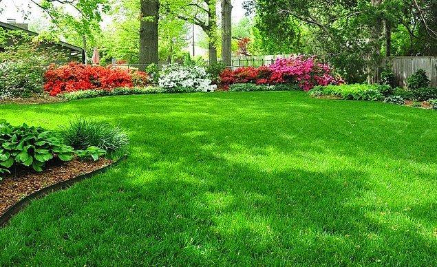 13. Sık sık yeni kesilmiş çim kokusunun burnumuza gelmesi