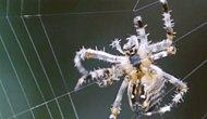 14 Things We Should Learn From Spiders Instead Of Fearing Them
