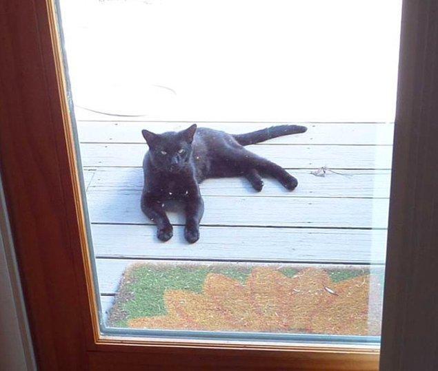 İskoçya ve İrlanda da eğer kapınızda siyah bir kedi belirirse bu mutluluk huzur ve refah ın habercisiydi