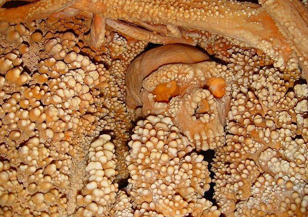 10. Altamura Adamı En Eski Neandertal DNA Örneğini Sağladı
