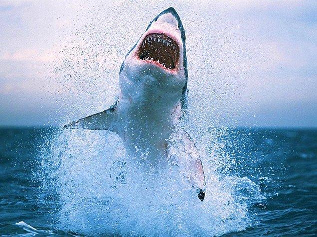 20. Köpekbalıkları