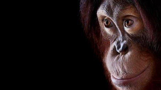 7. İnsan Beyni vs Primat Beyni