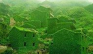 Природа забирает обратно все, что принадлежит ей - 17 фотографий заброшенной деревни