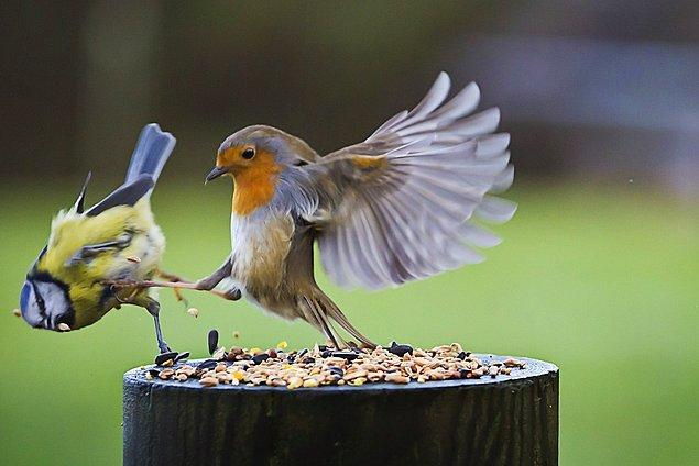 """6. """"This is Sparta!"""""""