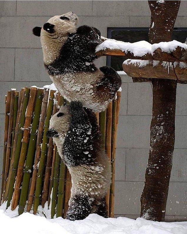 8. Prison Break'in panda versiyonu sanki.