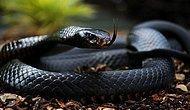 Yeryüzünün En Zehirli 10 Hayvanı