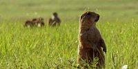 21 Facts About Prairie Dogs You Must Know!