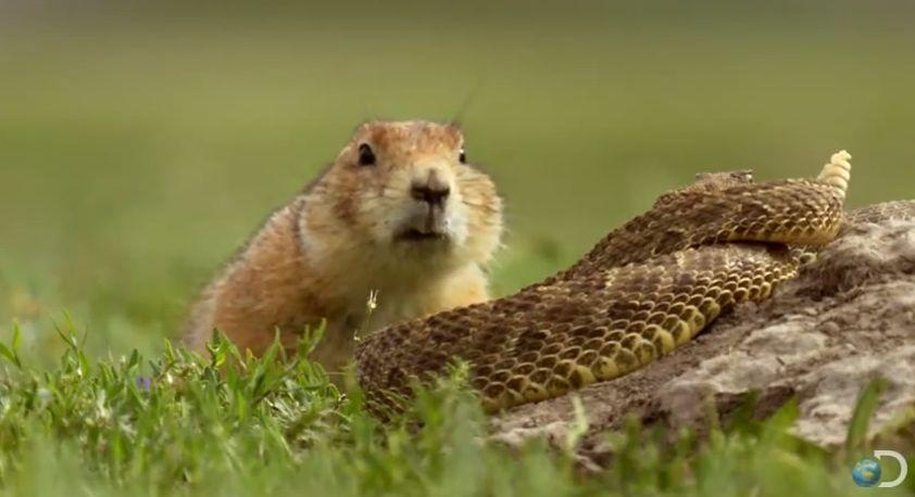 21 Facts About Prairie Dogs You Must Know Onedio Co