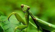 16 Important Life Lessons We All Should Learn Praying Mantis!