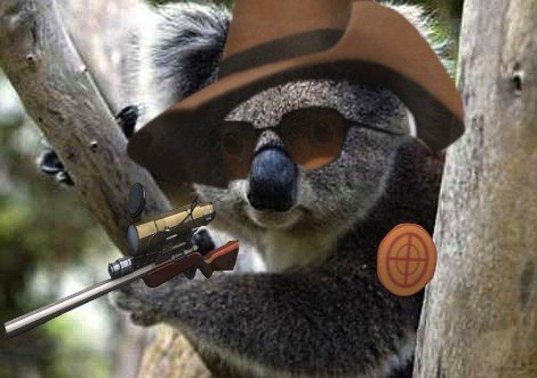 Çalışkan Koala