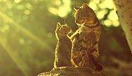 Fatih'te Kedi Olmanın 18 Farklı Hali