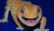 These 25 Photos of Geckos Smiling will Make Your Day