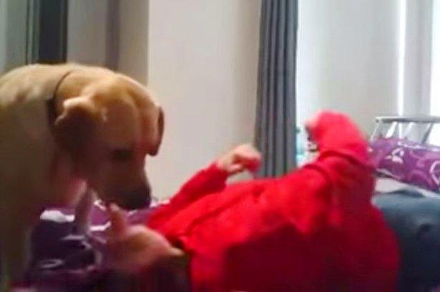Yatak odasına kriz geçiren Shannon aşırı tükürük nedeniyle boğulmak üzereyken Poppy onu yalamaya başlıyor.