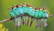 25 согревающих сердце фотографий крылатых, которые вы непременно должны увидеть!