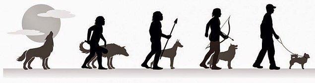 Köpekler kendi oluşturduğumuz Yapay Seçilim'in bir parçasıydı.