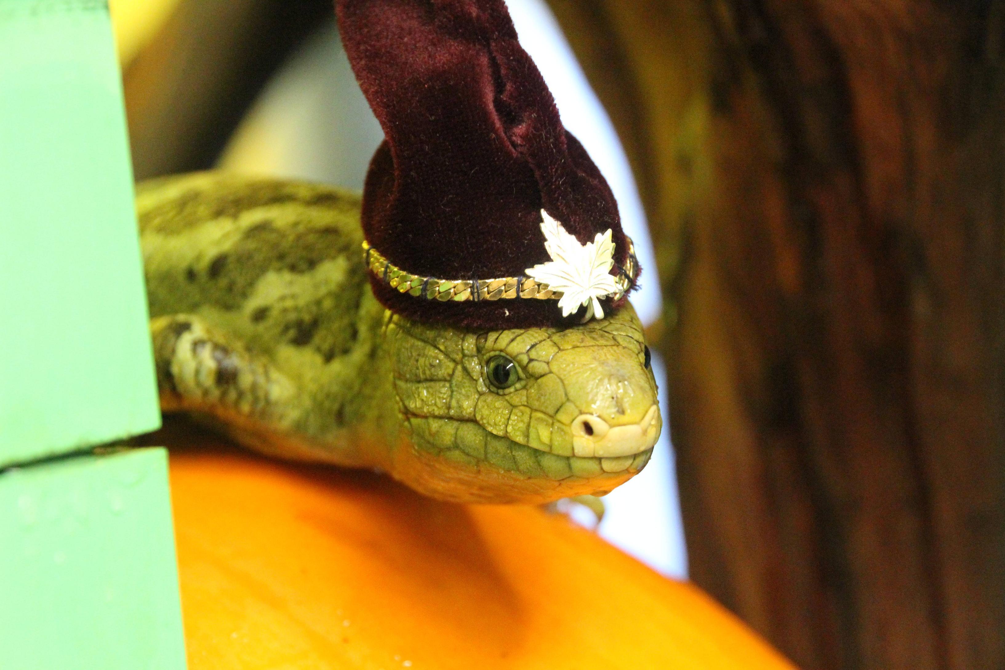 Картинки про смешных ящериц, днем рождения
