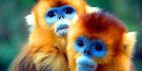 42 редких представителя фауны, в существование которых трудно поверить