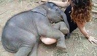 Слоненок засыпает под колыбельную на руках у девушки