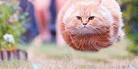 28 веселых фотографий с кошками, которые заставят вас улыбнуться