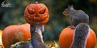 В отличие от людей, животные умеют по-настоящему наслаждаться осенью!