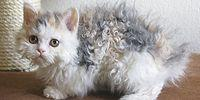 17 Extra Soft, Extra Fluffy And SUPER DUPER ADORABLE CATS!
