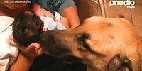 Детишки впервые знакомятся с собачками