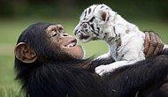 """Нерушимая дружба зверей: таких """"альянсов"""" вы еще не видели"""