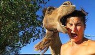 Next Big Thing After Camel Toe: Introducing Camel Bites