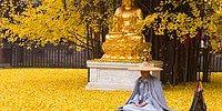 Древнее китайское дерево превращает землю буддийского храма в желтый океан