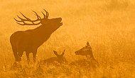 Живописные фото благородных оленей в Ричмонд-парке
