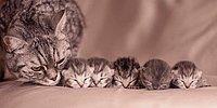 """61 фотка """"Семейств кошачьих"""""""