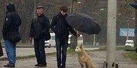 17 прохожих, которые готовы поделиться зонтом