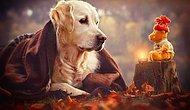 Теплые рождественские фотографии с симпатичным псом в главной роли